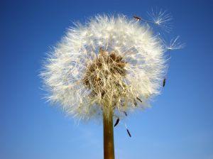 Testament życia skończy z ratowaniem na siłę, eutanazja?